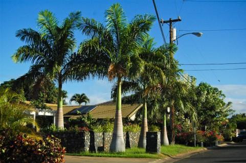 ハワイ ホノルル画像