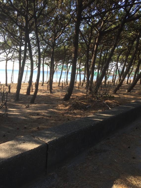 稲毛海岸画像2