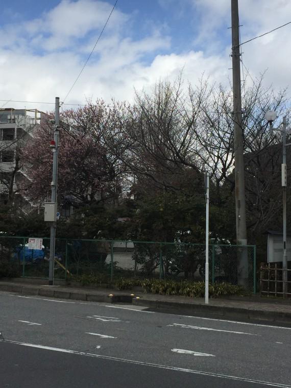 巌嶋神社の桜1