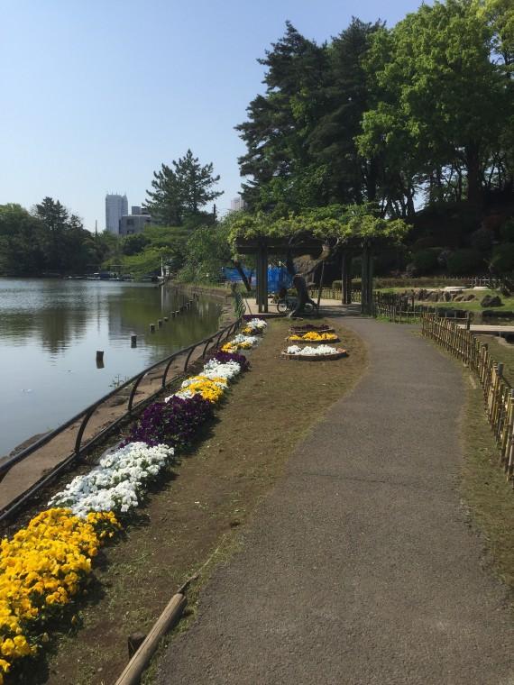 千葉公園写真