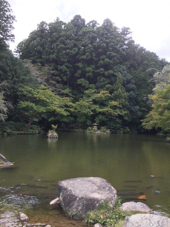 竜樹の池写真