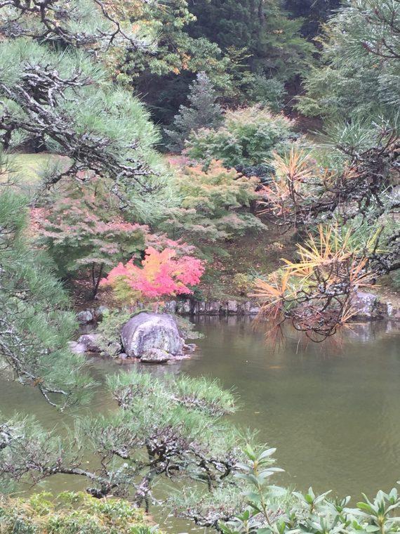 松の葉紅葉写真
