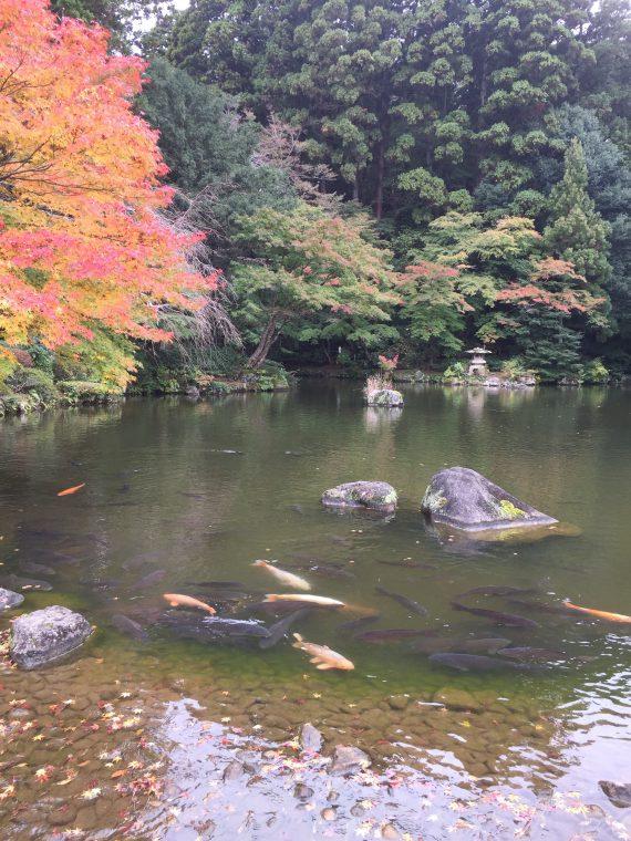 竜樹の池写真2